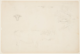 Horizontal sheet containing a ox heads and hind-parts at upper left; leaf covered branches of an oak tree at upper right; and two standing oxen yoked together and seen in right profile at lower center.