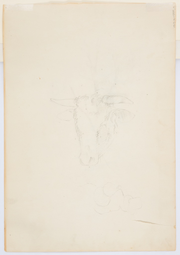 Recto: Vertical view of a moss covered, fern filled, rocky stream bank in lower foreground with three pine trees filling the middleground.  Verso: Horizontal study of a cow's head at left and an outlined figure wearing a high-crowned hat, seen from the back.