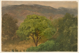Trees are shown in the foreground and middle plane. A mountain range is in the back.