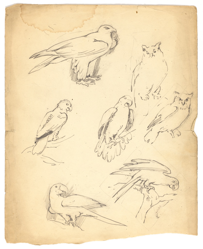 "Illustrations for Florence Choate and Elizabeth Curtis, ""Abby in the Gobi."" Two owls, four parrots and one bird of prey in various poses."