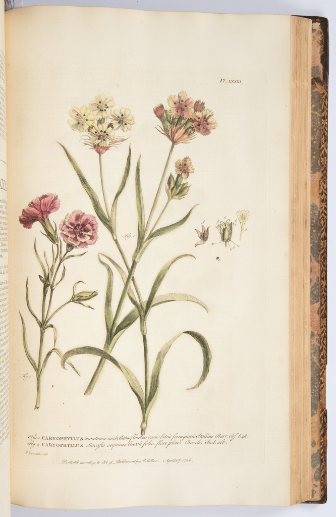 Figures Of The Most Beautiful, Useful, And Uncommon Plants 