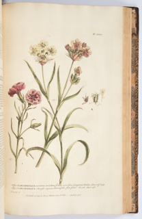 Figures Of The Most Beautiful, Useful, And Uncommon Plants  , Book, 1755