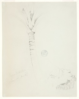 Drawing, Coconut Palm, Jamaica