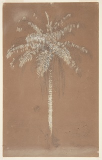 Vertical view of a palm tree rising straight over bushes