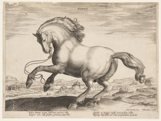 "A Danish horse from the fourth set of ""Equile Joannis Austriaci,"" the stud of Don Juan of Austria (died 1578).  Horse galloping toward left. Signed bottom right: ""Johan. Strada. inuent. / Phls Gallaeus excudit.""  At the bottom margin, a verse of two pairs of lines: ""Saltu Danus atrox,"" etc."