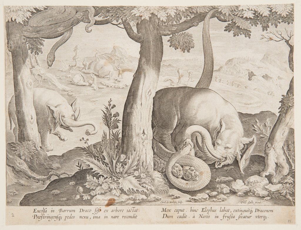 """Horizontal rectangle. An elephant is attacked by a serpent, right foreground. Another serpent, in a tree, left, watches an approaching elephant. In the background, Troglodytes cut up and carry off the carcass of an elephant. Left of center, below: """"Ioan Stradanus invent.""""; right of center, below: """"Carol de Mallery Sculp.""""; lower right: """"Phls Galle excud."""" Below: """"EXCELSA IN BARRUM DRACO SESE EX ARBORE IACTAT..."""""""