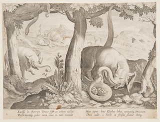 "Horizontal rectangle. An elephant is attacked by a serpent, right foreground. Another serpent, in a tree, left, watches an approaching elephant. In the background, Troglodytes cut up and carry off the carcass of an elephant. Left of center, below: ""Ioan Stradanus invent.""; right of center, below: ""Carol de Mallery Sculp.""; lower right: ""Phls Galle excud."" Below: ""EXCELSA IN BARRUM DRACO SESE EX ARBORE IACTAT..."""