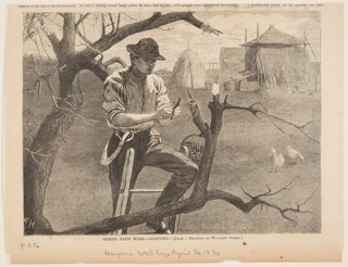 View of a man on a ladder pruning a tree. Lower half of the page.
