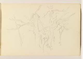 Light outlines of four trees, all without leaves.
