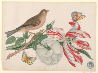 Drawing, Brown Bird on Branch with Rose, Tulip, and Insects