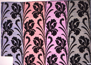 Ground shot with frisé silver or gold thread. Large-scale vertical repeat of conventionalized iris in black cut velvet. Ground color given by main silk warp of vertical stripes of purple, pale orange, pink, and blue-gray.