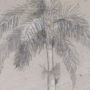 Sketch of royal palm trees on a hillside.