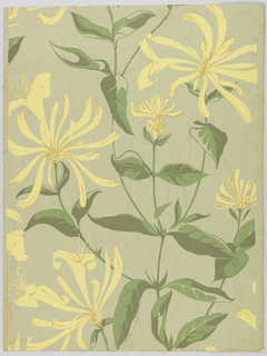 Slightly more than one repeat of design composed of large-scale honeysuckle flowers and leaves. Printed in yellow, brown and greens on neutral green ground.