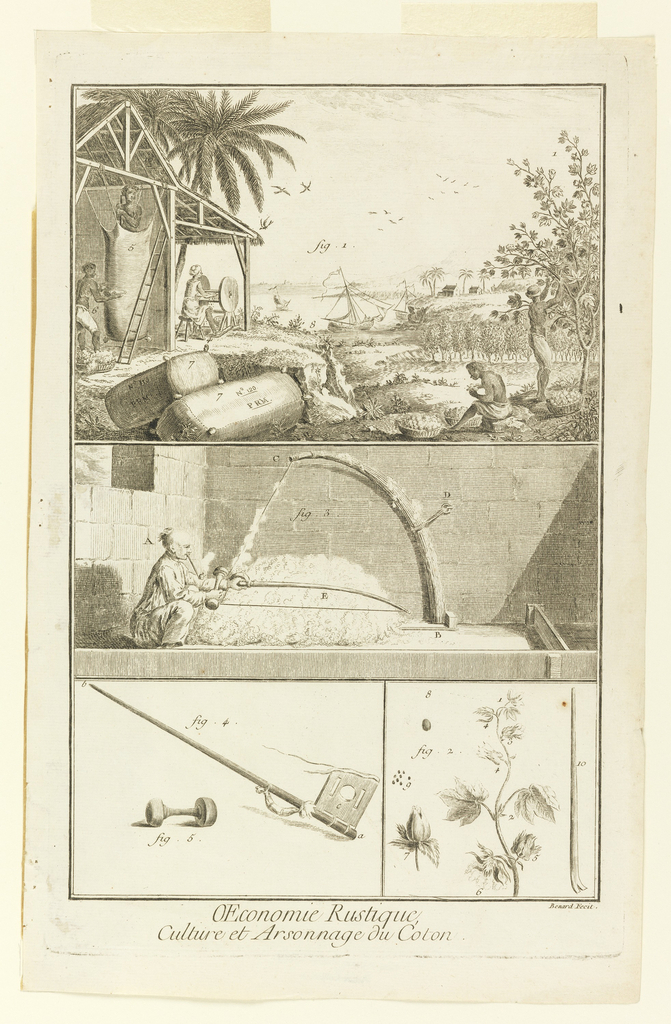 """Print, """"Culture et Arsonnage du Coton"""" from Diderot's Encyclopedia, Vol. I"""