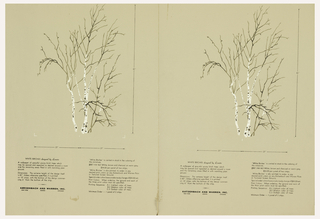 "Two identical miniatures of the ""White Birches"" mural, printed side by side.  Each is a cluster of birch trees that are bare except for a few dangling leaves. Printed on tan ground."