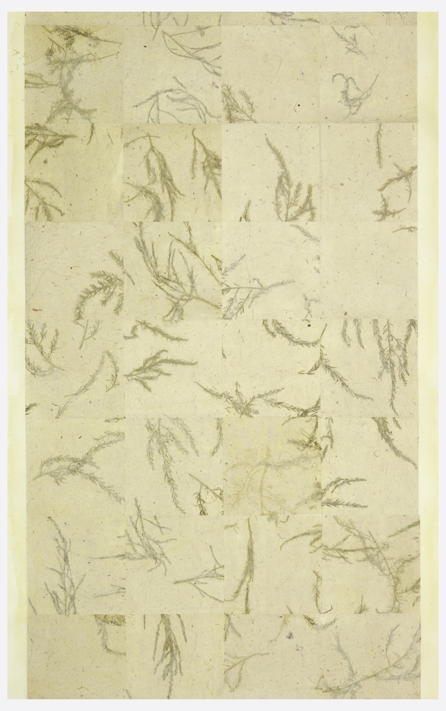All-over pattern of large-scale grid design, created with sheets of fibrous paper containing dried foliage.