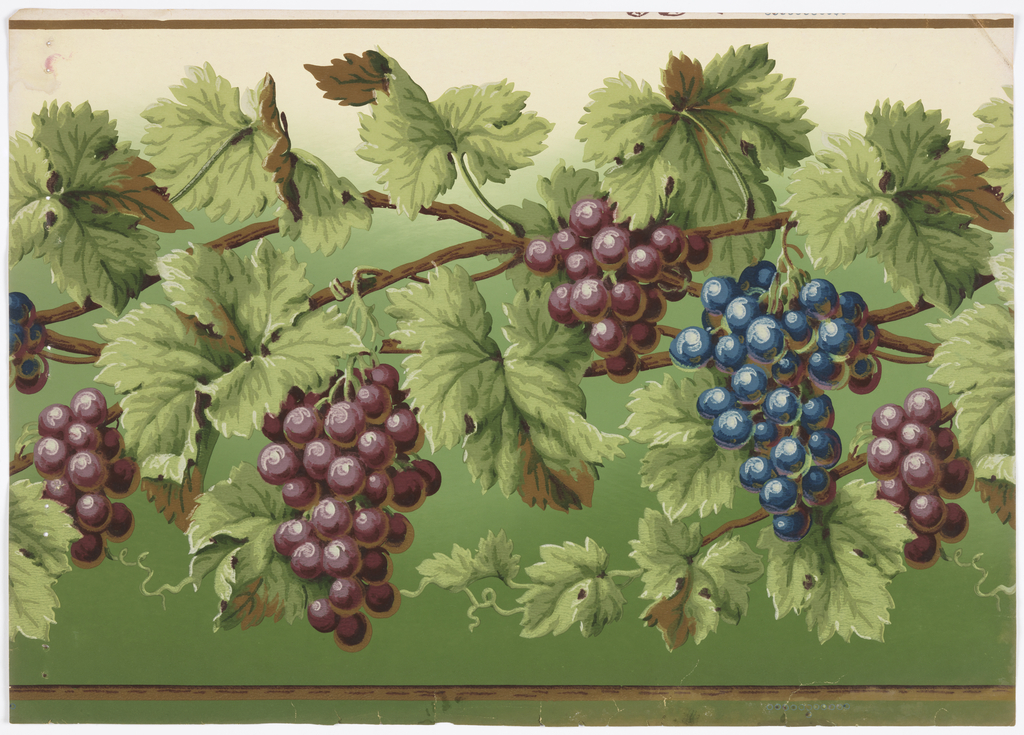 Realistically rendered grape vines, with leaves, bearing both red and purple grapes, on background shading from dark to light green.