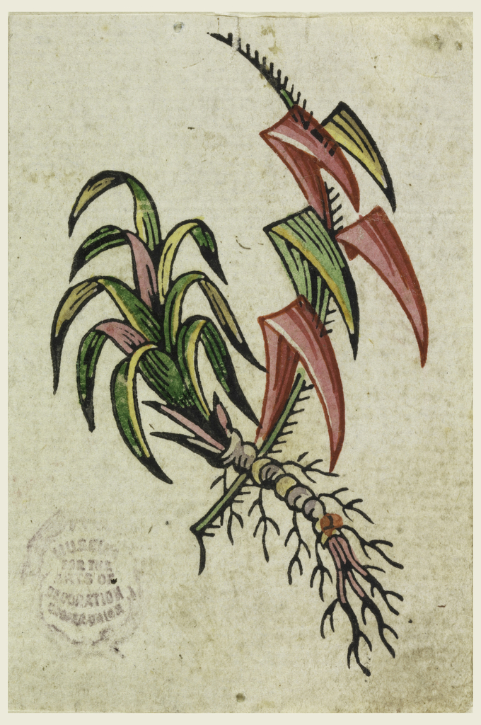 Pink, yellow and green sword-shaped leaves on two stalks, one with spines, the other with roots.