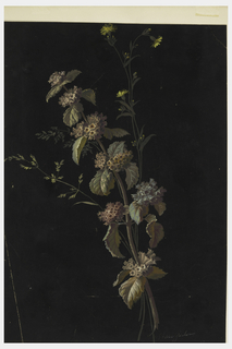 Bunch of darkly-colored wild flowers on black ground.
