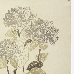 Large scattered hydrangeas printed in brown, gray and beige on natural color foundation fabric.