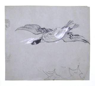 Horizontal view of a wild goose in flight, with the first position of haead corrected with white crayon above the final position in which the head was drawn.