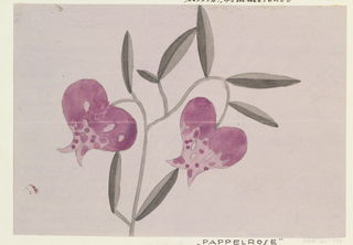 Drawing, Textile Design: Pappelrose (Hollyhock)