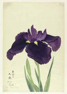 A large iris in deep purple; inner leaves lighter in hue.