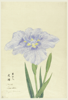 A large iris, outer perianth leaves in mottled light blue and violet tints; inner leaves light blue.