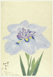 A large light blue iris, the inner perianth leaves, purple. Upper portion of leaves, stem, bud. Lower left, in ink: No. 10 Yomonoumi. The open sea from the 4 points.