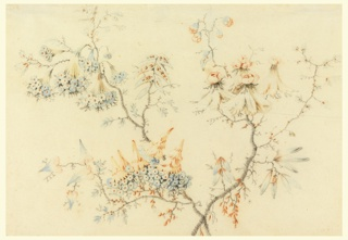 Drawing of two long branches. Upper left, bouquets of small blue flowers; lower left, small blue flowered bunches with red inverted cone shapes on top; upper right, red rose like flowers sitting on top of feather-like bases.