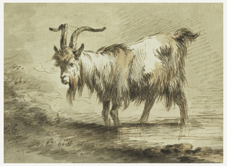 Close up study of a standing bearded, horned goat, facing left.