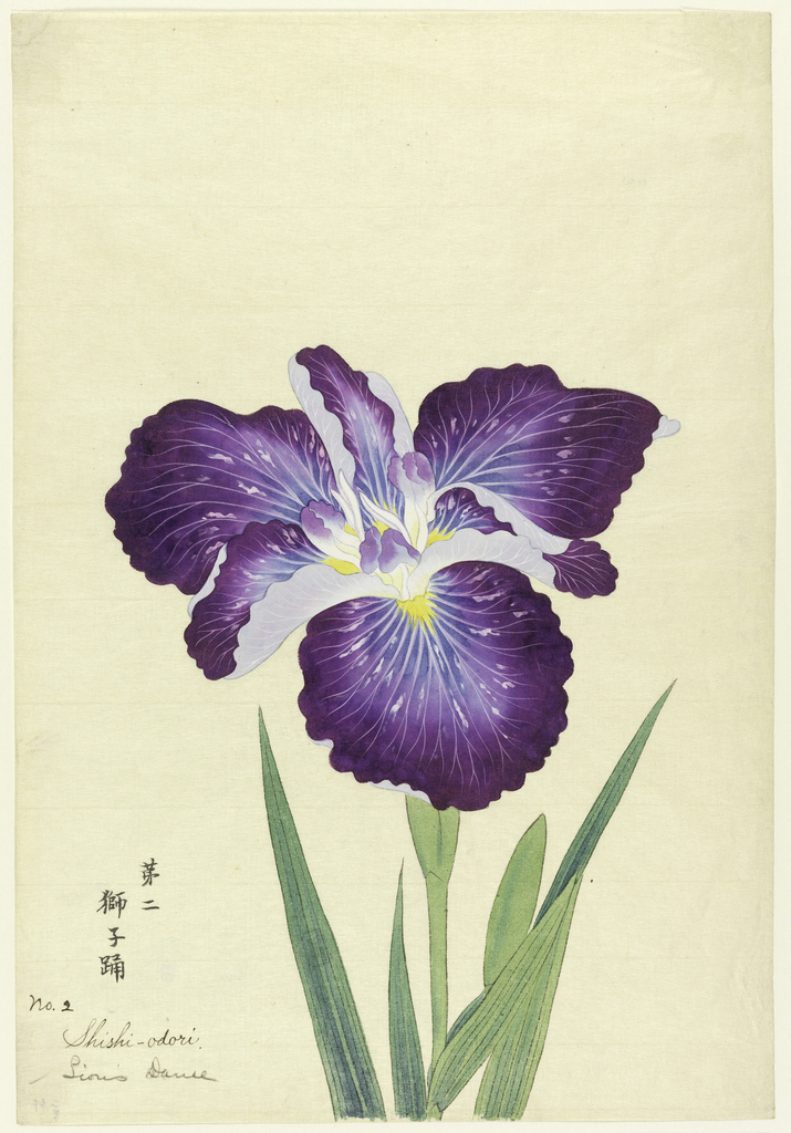 A large deep purple iris, showing the upper portion of the stem and leaves, against a neutral background.