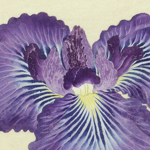 A large iris, outer perianth leaves blue-violet to blue at center; inner leaves violet.