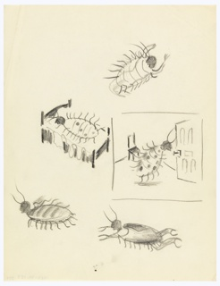 Likely a study for an illustration for Franz Kafka's The Metamorphosis (1915), in which the human character Gregor Samsa is transformed into an insect. Five sketches of beetles resembling bed bugs. One lies on a bed (center left), while another approaches a door in a sparsely furnished room (center right), and three others are scattered above and below.