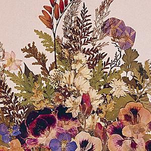 Ephemera, Album Pintoresco Herbario