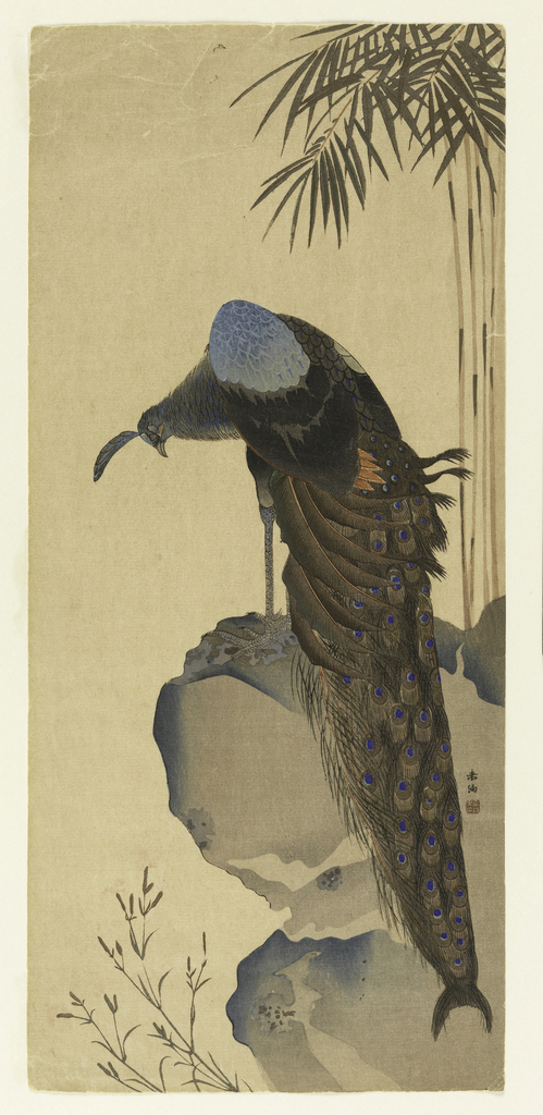 A peacock with lowered head stands atop high cliffs. Some Japanese characters.