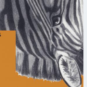 """On orange ground, two identical photographs of zebras, one appearing rotated 90 degrees. In the center , text in black: """"Austellungsstrasse 60, 8031, Zurich / D-FR 10-18 hr; M 10-21 uhr; Sa, So- 10-17 uhr Mo geschlossen SO169, Eidg Bettag Geichschlossen"""" followed by """"MUSEUM / FUR / GESTALTUNG / ZURICH, then the dates 29.8-14.10.90"""",  and slightly to the right, """"WISSSENSCHAFTLICHENS. / ZEICHNEN."""