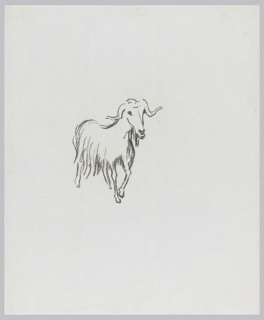 Drawing of a long-haired ram with horns.