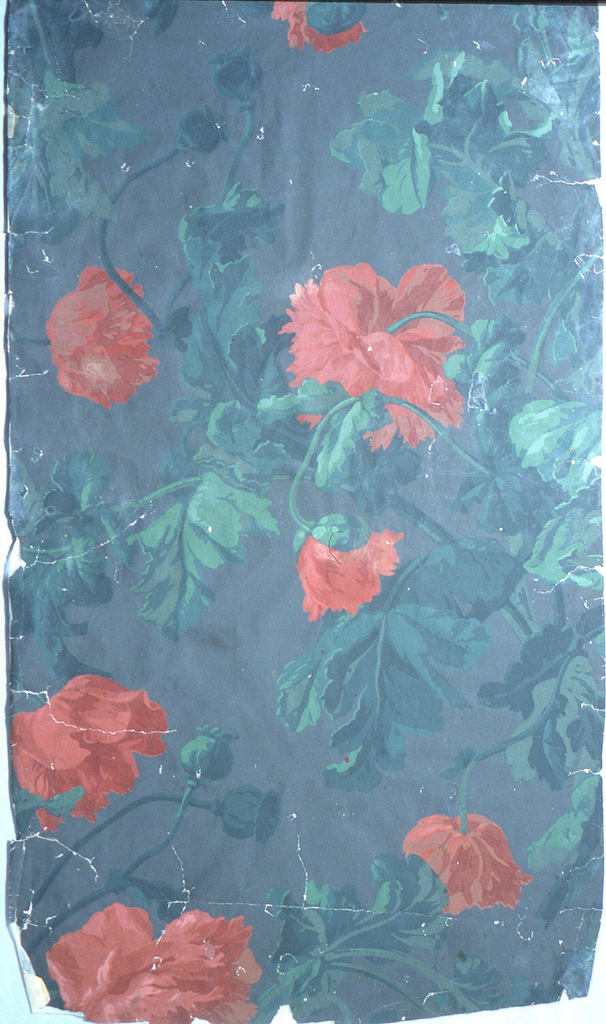 On dark gray ground, scattered tangle of large green ragged leaves, deep red large double poppies.