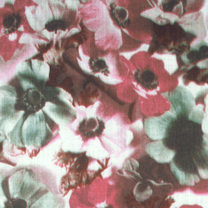 Photographic printing of crowded flowerheads in brilliant colors on white.