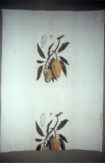 Length of printed silk with stems of mango fruit and leaves, drawn as in a botanical print, in yellow, green and brown on an off-white ground.