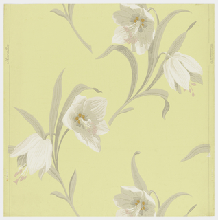 "A tulip composed of two different alternating sprays. Printed on margin: ""Muralia, Union Made"". Printed in ivory, rose and gray on soft yellow field."