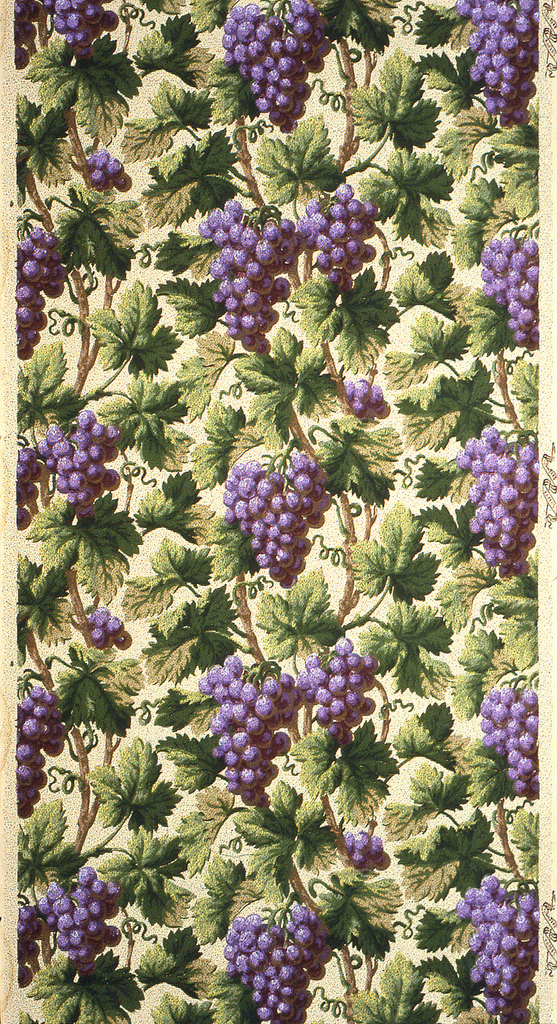 Large bunches of purple grapes, hanging on very dense vine and foliage background. For dining rooms.