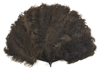 Brisé fan. Tortoise shell sticks with black ostrich feathers, graded larger toward center; smaller tips are massed on outer guard.