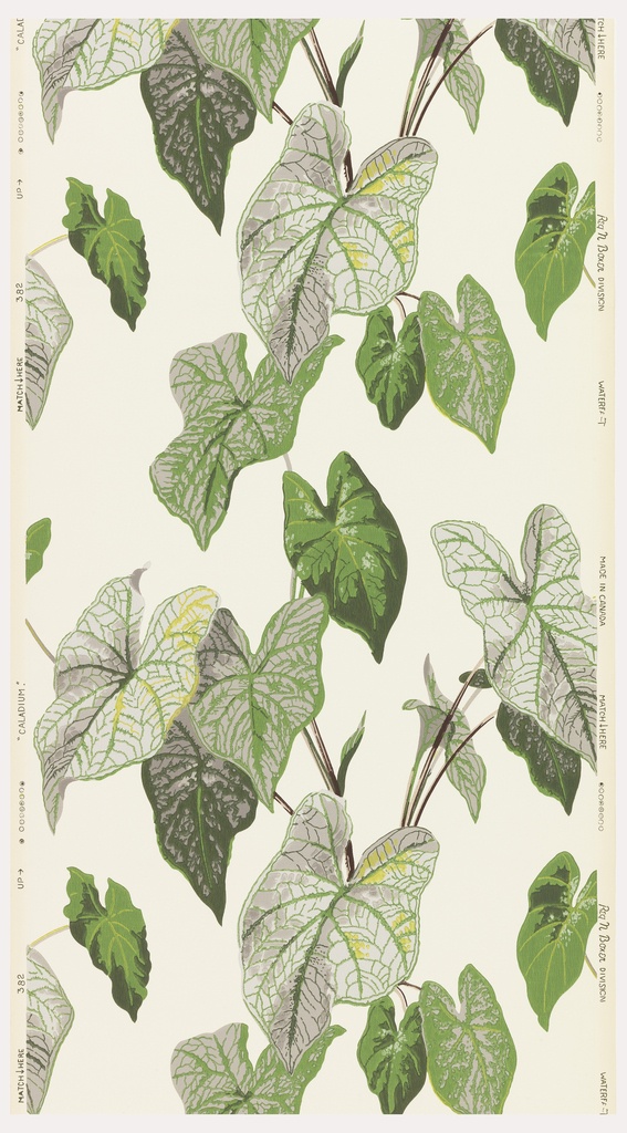 Large caladium leaves printed in shades of green on a white ground.